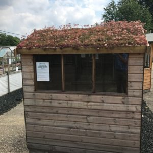 Sedum green roof on a small garden shed